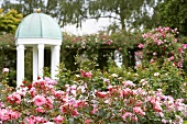 Rose garden with pavilion