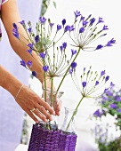 Hands holding vase of Triteleia