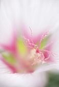 A flower (close-up)