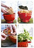 Making a hanging basket for a strawberry plant from a colander