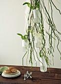 Green plants in hanging vases