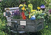 Wooden box of vegetables and plants on garden seat