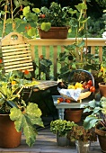 Various types of vegetables on a balcony