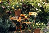 Roses on garden table (Historic Rose Gardens, Hemmingen)
