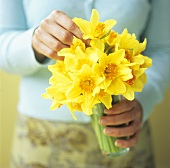 Small bunch of yellow narcissi