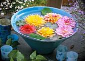 Dahlia flowers floating in blue bowl