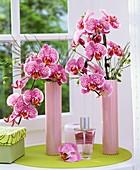 Phalaenopsis and broom in pink vases by window