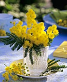 Posy of fragrant silver wattle