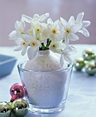 Small posy of fragrant Tazetta narcissi for Christmas
