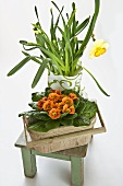 Primulas and narcissi on wooden stool