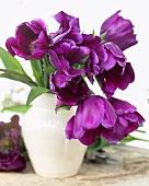 Purple tulips, variety: Purple Rain, in a vase
