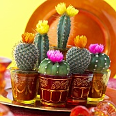Various cacti with flowers