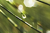 Raindrop on blade of grass