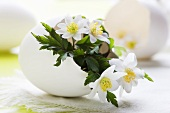 Wood anemones in duck egg