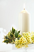 Candle with cowslips and holly leaves