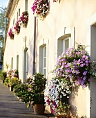 House with window boxes and container plants