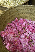 A basket of rose petals