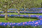 Tulips and hyacinths in Keukenhof, Holland