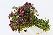 A tied bunch of oregano flowers