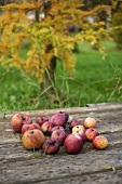 Herbstliches Stillleben mit Äpfeln im Garten