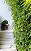 Potted plants on steps (Villa Bamboo, Southern France)