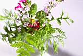 Bunch of mixed herbs with flowers