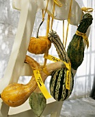 Squashes with place cards