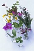 Edible leaves and flowers in glasses of water