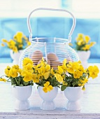 Yellow pansies in eggcups