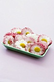 Daisies in a small bowl