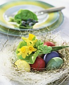 Easter nest with coloured eggs and narcissi