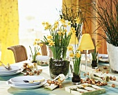 Laid table decorated with narcissi