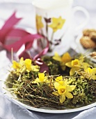 Hay wreath with narcissi