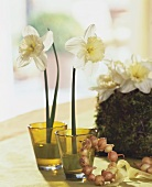 Two narcissi in vases with bulb napkin ring