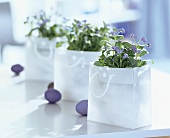 Forget-me-nots in carrier bags & blue Easter eggs