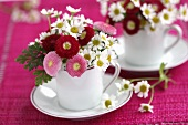 Small posies of chamomile and Bellis in cups