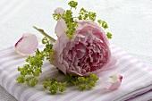 Eine Pfingstrosenblüte mit Frauenmantel