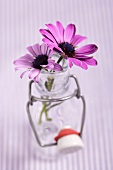 Two Osteospermums in a bottle