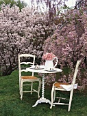 Table with jug of cherry blossom among blossoming trees