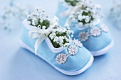 Baby's shoes filled with 'baby's breath' (Gypsophila)