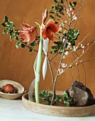 Amaryllis flower and holly in shallow bowl