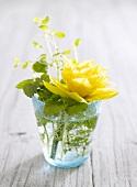 Frühlingsblume im Wasserglas als Tischdeko