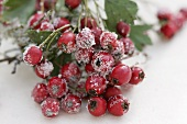 A sprig of sugared haws