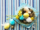 Various types of eggs in Easter nest with narcissi and hay
