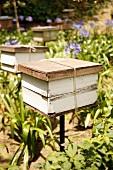 Beehives in a tropical garden (Malaysia)