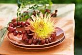 Rose hip wreaths with dahlia on a plate