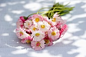 Posy of white and pink bellis flowers