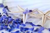 Lavender flowers and starfish on a shell