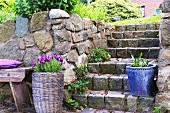 Ripe cherries on a flight of stone steps in a farmer's garden