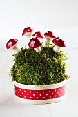 New Year's decoration with moss and decorative toadstools